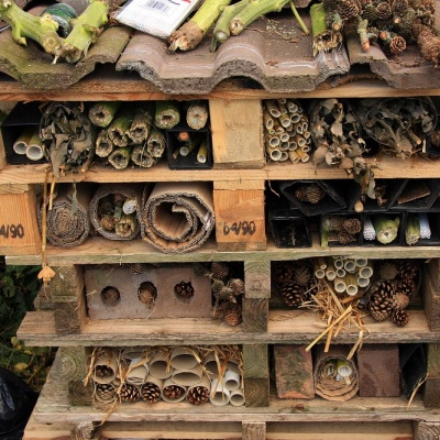 Bugs hotel at the allotments