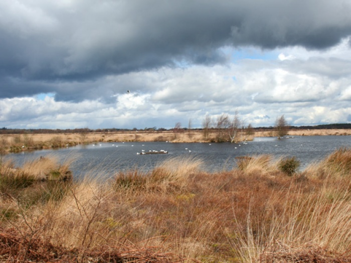 Lake_on_Whixall_Moss_-_geograph-org-uk_-_762733 (1) - Copy